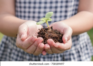Tree planting growing on soil in girl child's hand for saving world environment, tree care, arbor day,Tu Bishvat (B'Shevat) environmental protection, ecological education concept for school students