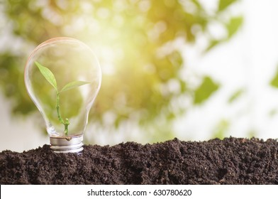 tree planting and growth up, stacked on light bulb with soil , concept in save World environment day reforesting eco bio arbor CSR ESG ecosystems reforestation