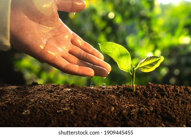 Tree planting ,Hands watering the plants in nature