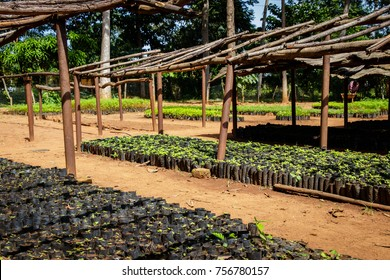 Tree planting Uganda, this is a plantation where many seedlings are grown with wooden racks to protect them against rain and sun