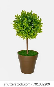 Tree plastic is green color on white isolated background.