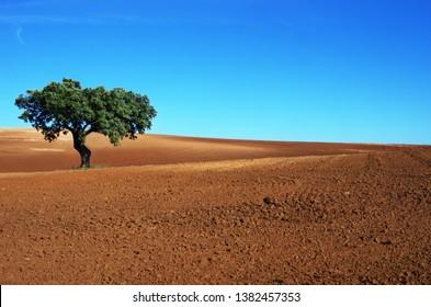 tree in plowed field, alentejo region, Portugal