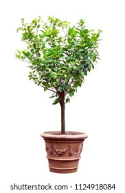 Tree in a pot isolated