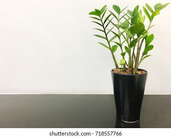 tree in a pot with white background