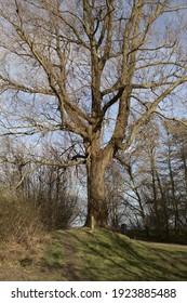 Tree preparing itself for spring