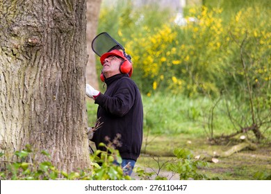 Tree pruning by a man with a chainsaw,  with a safety helmet on