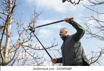 Tree pruning during sunny winter day