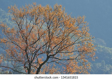 Tree put forth leave on spring season with mountain view background