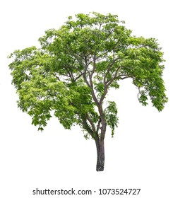 Tree real isolate die cut on white background with clipping path