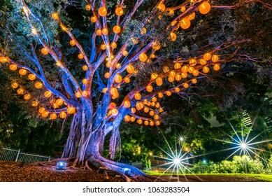 Tree with red lantern in Roma Street Parkland, Brisbane City