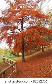 tree with red leaves in the park