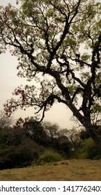 tree red natural green argentina salta san lorenzo