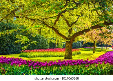 Tree and red tulip flowers in spring garden. Keukenhof, Netherlands, Europe.