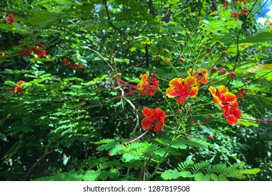 Tree with red and yellow flowers. Nature.