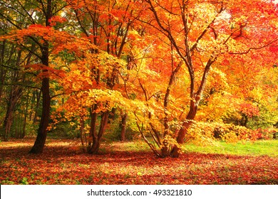 Tree with red and yellow leaves on a sunny autumn day