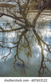 The tree is reflected in the spring flood of the river