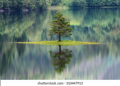 Tree reflecting in a lake in Norway