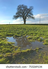 Tree reflecting in puddle on green field