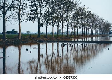 Tree - reflection