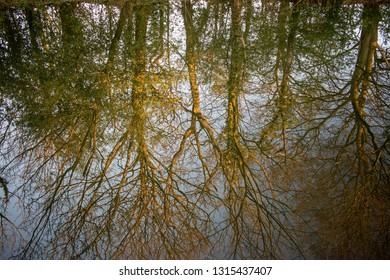 Tree reflection from Birmingham canal
