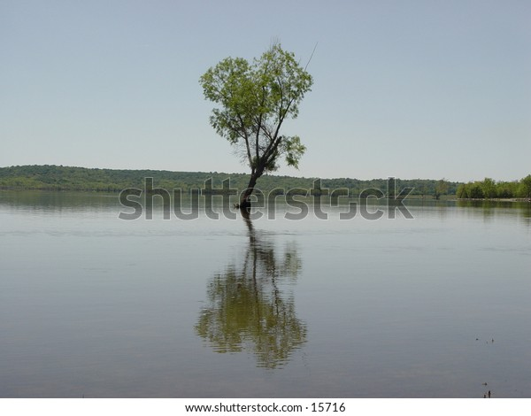 A tree and reflection in a flooded lake