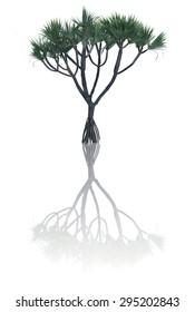 tree  reflection isolate