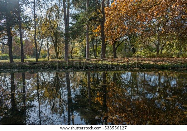 Tree reflection on the lake in the park