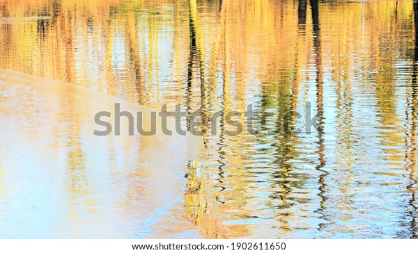 tree-reflection-pond-winter-600w-1902611