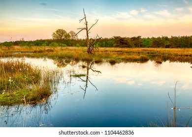 Tree with reflection in wetlands and moorland on the national park Groote Zand near Hooghalen Drenthe during sunset.