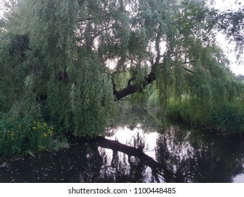 Tree reflexion in water