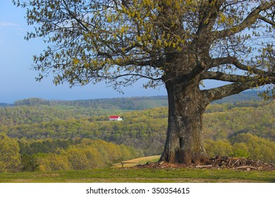 Tree and remote farm with backdrop of hills and forests on the background