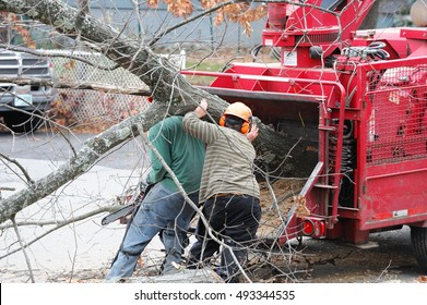 tree removal and worker moving tree trunk to grinding machine