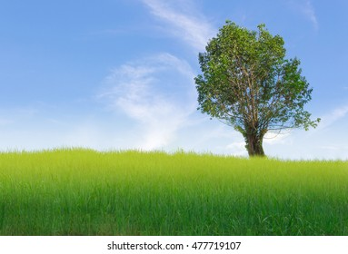 a tree with rice field and blue sky
