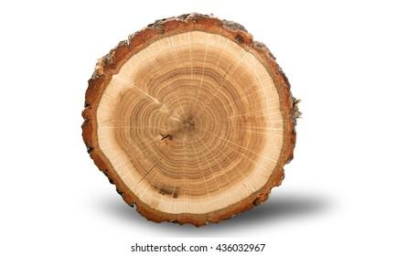 Tree Ring.