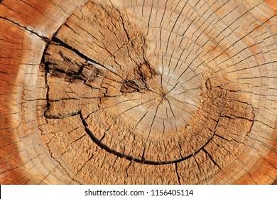 Tree ring close-up