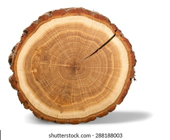 Tree Ring, Log, Wood.