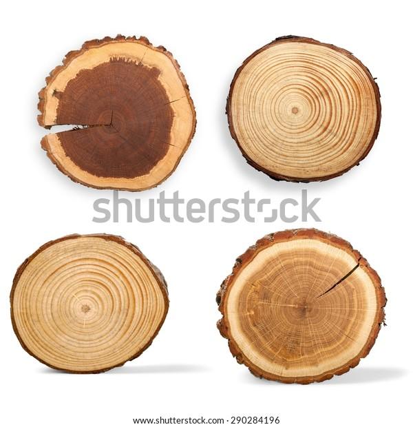 Baumring, Rundgang, Holz.