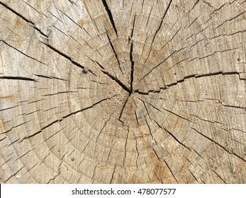 Tree rings close up