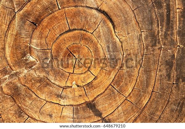 Tree Rings Dendrochronology Way Measuring Scientific Stock