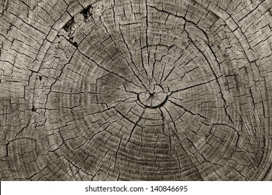 Tree rings old weathered wood texture with the cross section of a cut log showing the concentric annual growth rings as a flat nature background and conservation concept of forestry and aging.