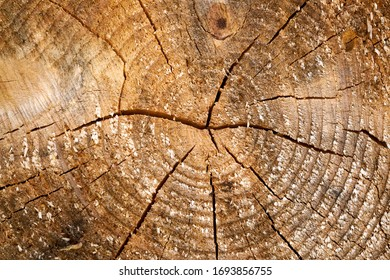 Tree rings old weathered wood texture with the cross section of a cut log. - Shutterstock ID 1693856755