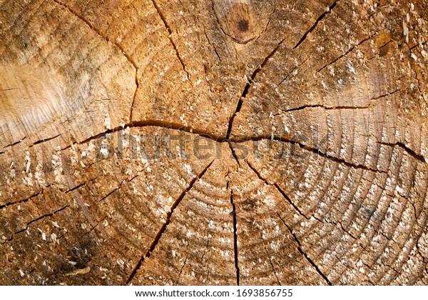 Tree rings old weathered wood texture with the cross section of a cut log.