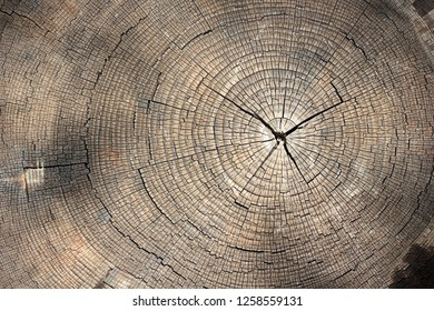 Tree rings texture background