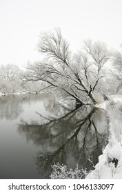 Tree in river covered with snow