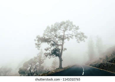 Tree and road in the cloud