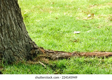 tree root with grass