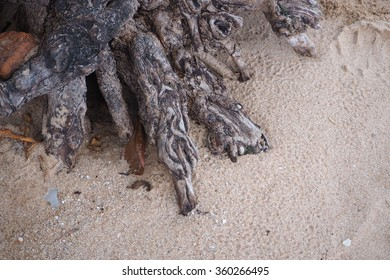tree root on sand beach