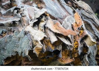 Tree root opening