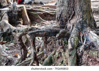 tree roots art