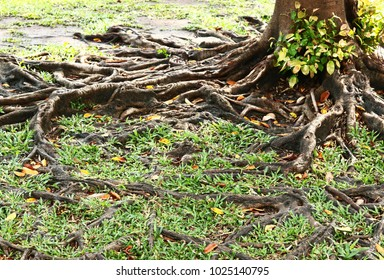 Tree roots in autumn with sunlight